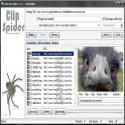 Clip Spider